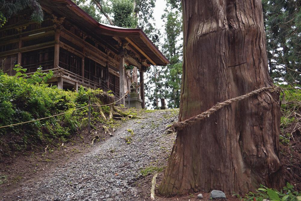 真清田神社の杉